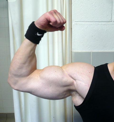 Programme Super Biceps